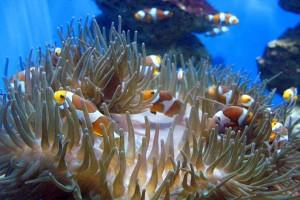 Oceanarium wStralsundzie