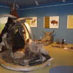 Muzeum Przyrodnicze Wigierskiego PN