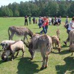 Park Dzikich Zwierząt - Kadzidłowo